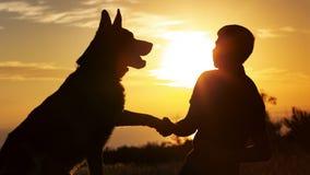 Sylwetka młody człowiek potrząsalna łapa jego ulubiony pies w polu przy zmierzchem, chłopiec z purebred zwierzę domowe Niemieckie fotografia royalty free