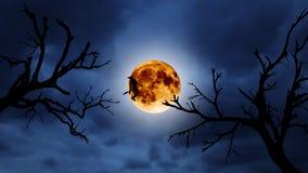 Sylwetka młody czarownicy latanie na broomstick przeciw tłu pomarańczowa księżyc halloween Nad starymi drzewami ilustracji