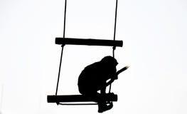 Sylwetka małpa Obrazy Royalty Free