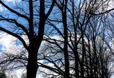 Sylwetka nadzy drzewa przeciw błękitnemu wiosny niebu Fotografia Stock