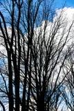 Sylwetka nadzy drzewa przeciw niebieskiemu niebu w wiośnie Obrazy Royalty Free