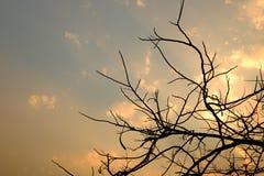 Sylwetka nieżywy drzewo Obrazy Royalty Free
