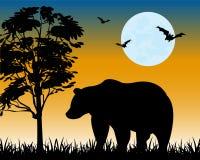 Sylwetka niedźwiedź na haliźnie Zdjęcia Stock