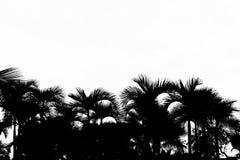 Sylwetka odizolowywająca na białym tle drzewo obraz stock