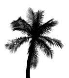 Sylwetka odizolowywająca na bielu kokosowy drzewo royalty ilustracja