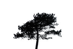 Sylwetka odizolowywająca osamotniony drzewo Obrazy Royalty Free