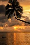 Sylwetka oparty drzewko palmowe przy wschodem słońca na Taveuni wyspie, Fi Obraz Royalty Free