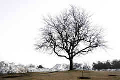 Sylwetka osamotniony drzewo Zdjęcia Royalty Free