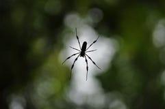 sylwetka pająk Fotografia Stock