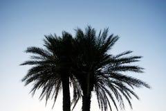 Sylwetka palma Obrazy Stock