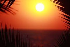 Sylwetka palmtree z wschodem słońca na tle i przestrzeń dla twój teksta Zdjęcie Royalty Free
