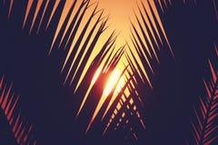 Sylwetka palmtree z wschodem słońca na tle i przestrzeń dla twój teksta Zdjęcie Stock