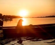 Sylwetka pies w plażowej łodzi na zmierzchu Zdjęcie Stock