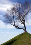 Sylwetka pojedynczy drzewo bez liści na górze wzgórza, gree Fotografia Royalty Free