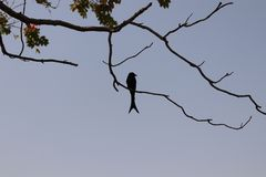 Sylwetka ptak obraz royalty free