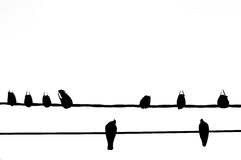 Sylwetka ptak na elektrycznym drucianym kablu na bielu Zdjęcia Stock