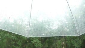 Sylwetka raindrops na przejrzystym parasolu, widok spod parasola na zielonych drzewach w deszczu 4k, wolny zbiory