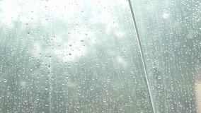 Sylwetka raindrops na przejrzystym parasolu, widok spod parasola na zielonych drzewach w deszczu 4k, wolny zbiory wideo