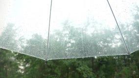 Sylwetka raindrops na przejrzystym parasolu, widok spod parasola na zielonych drzewach w deszczu 4k, wolny zdjęcie wideo