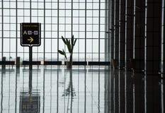 Sylwetka rośliny pozycja przeciw ogromnemu okno w airpor obraz royalty free
