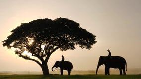 Sylwetka słonie i mahouts w ranku wśród naturalna sceneria zbiory