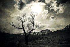 Samotny drzewo w blasku księżyca Fotografia Royalty Free