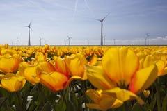 Sylwetka silniki wiatrowi przeciw niebieskiemu niebu z pomarańczowymi tulipanami obraz royalty free