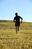 Sylwetka sporta mężczyzna biega z drogi w wsi na żółtym trawy polu przy zmierzchem Fotografia Royalty Free