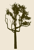 Sylwetka stary deciduous drzewo Fotografia Royalty Free