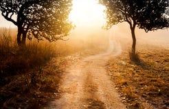 Sylwetka tajemnica las w ranku spaceru sposobie z beauti Obrazy Stock