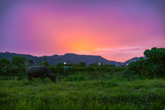 Sylwetka tajlandzki bizon zdjęcie stock