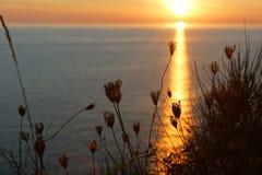 Sylwetka trawa na tle zmierzch na morzu Obraz Royalty Free