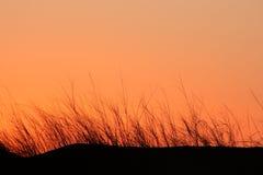 sylwetka trawy Fotografia Stock