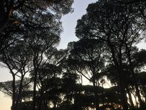 Sylwetka treetops obraz stock