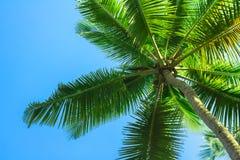 Sylwetka tropikalny drzewko palmowe obrazy royalty free