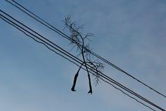Sylwetka widok nieboszczyk gałąź na elektrycznym drucie Zdjęcie Royalty Free