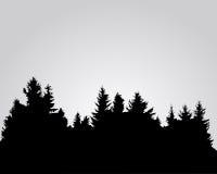 Sylwetka świerkowy las Obrazy Royalty Free
