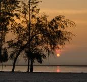 Sylwetka wschód słońca na ranku morzu i sosna Fotografia Stock