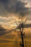 Sylwetka wysuszony drzewo z światłem słonecznym Obrazy Royalty Free