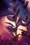 Sylwetka zielona roślina w łące podczas wschodu słońca Zdjęcia Stock