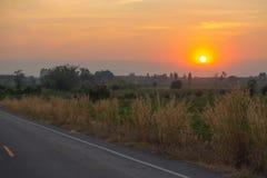 Sylwetka zmierzch trawa kwiatu kępa obok drogi zdjęcie stock