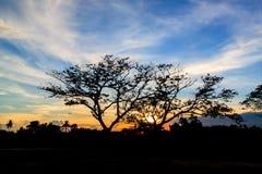 Sylwetka zmierzch w ogródzie i drzewo Obraz Stock