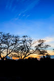 Sylwetka zmierzch w ogródzie i drzewo obraz royalty free