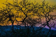 Sylwetka zmierzchu krajobrazu scena Zdjęcia Royalty Free