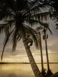 Sylwetki chłopiec pięcie na drzewku palmowym zdjęcie stock