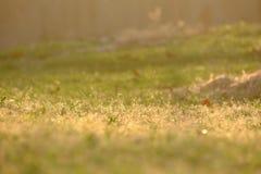 Sylwetki ciepły światło w wieczór ostatnio błyszczy na ziemi z selekcyjną ostrością trawy pole przy parkiem zdjęcia royalty free