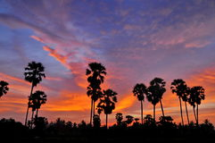 Sylwetki cukrowa palma Fotografia Stock