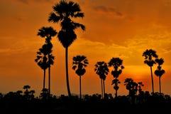 Sylwetki cukrowa palma Zdjęcia Royalty Free