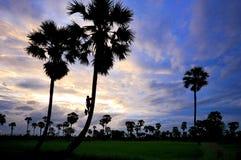 Sylwetki cukrowa palma Obrazy Stock