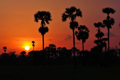 Sylwetki cukrowa palma Obrazy Royalty Free